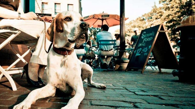 Recent Change To Outdoor Dining Laws Now Permits Dogs